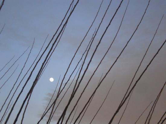 La Lune entre les branches