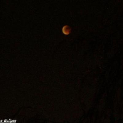 La Lune semble sortir des arbres...